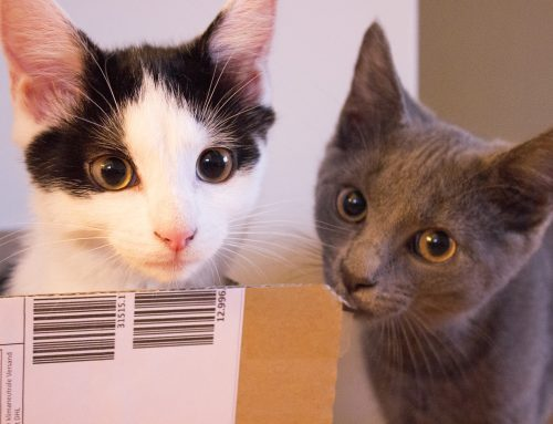 Malia & Feli